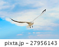 Seagull in the blue sky. 27956143