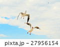 Two Seagull in the blue sky. Funny frame. 27956154
