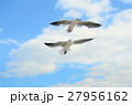 Two Seagulls in the blue sky. 27956162