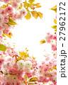 八重桜 27962172
