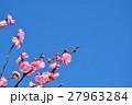 梅 花 紅梅の写真 27963284