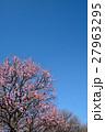 梅林と青空(N) 27963295