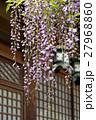 春日大社 砂ずりの藤 27968860
