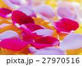 花びら 花弁 薔薇の写真 27970516