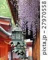 春日大社 砂ずりの藤 27970558