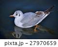 百合鷗 鳥 水鳥の写真 27970659