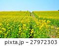高原の菜の花畑 27972303
