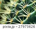 サボテン 植物 棘の写真 27973626