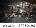 Reindeers in cattle-shed. 27980198