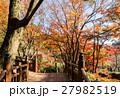 熱海梅園 紅葉 公園の写真 27982519