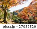 熱海梅園 紅葉 公園の写真 27982529