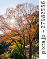 熱海梅園の紅葉 27982556