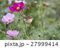 花と鳥 花鳥 花の写真 27999414