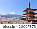 富士山と五重塔と春の風景 28007373