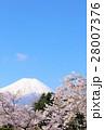 富士山 青空 春の写真 28007376