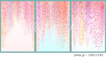 Spring background with blooming wisteria 28011585