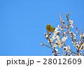 梅の花とメジロ(N) 28012609