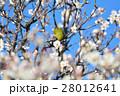 梅の花とメジロ(N) 28012641