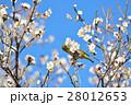 梅の花とメジロ(N) 28012653