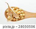 大豆 28030506