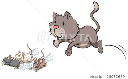 Gray kitten chasing mouse 28032629