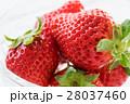 果物 苺 果実の写真 28037460