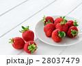 果物 苺 果実の写真 28037479