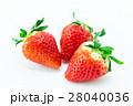 イチゴ 28040036