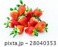 イチゴ 28040353
