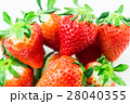 イチゴ 28040355