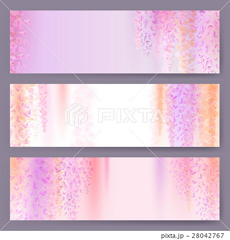 Spring background with blooming wisteria 28042767