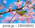 春の歓び 28049602