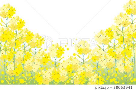 菜の花の背景のイラスト素材 28063941 Pixta