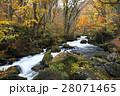 10月 阿修羅の流れ-紅葉の奥入瀬渓流- 東北の秋   28071465