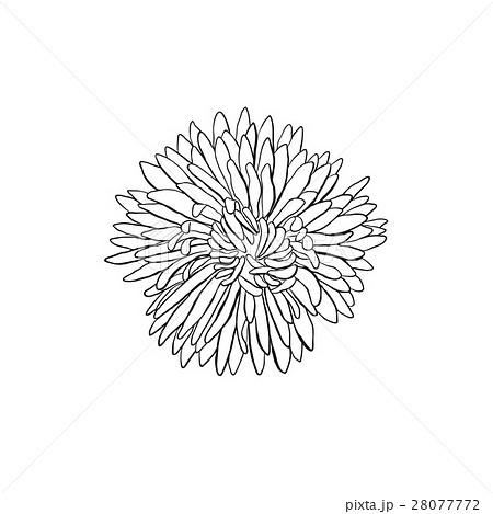 Hand drawn flowers collectionのイラスト素材 [28077772] - PIXTA