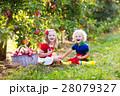 りんご リンゴ 林檎の写真 28079327