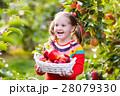りんご リンゴ 林檎の写真 28079330