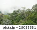 tropical rainforest in  Hala-Bala 28085631