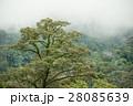 tropical rainforest in  Hala-Bala 28085639