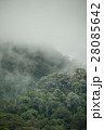 tropical rainforest in  Hala-Bala 28085642