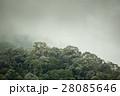 tropical rainforest in  Hala-Bala 28085646