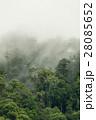tropical rainforest in  Hala-Bala 28085652