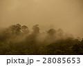 tropical rainforest in  Hala-Bala 28085653