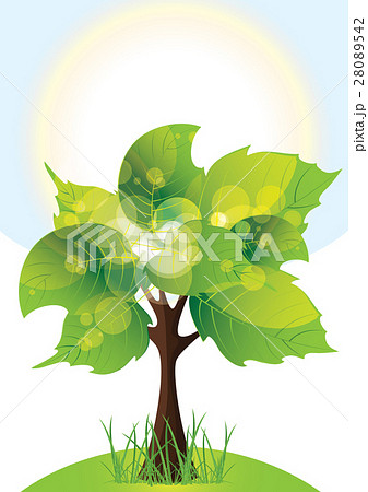 tree with lush green foliage, sunny day 28089542