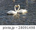 白鳥 28091498
