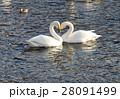 白鳥 28091499
