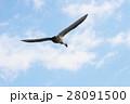 白鳥 28091500