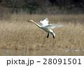白鳥 28091501