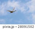 白鳥 28091502