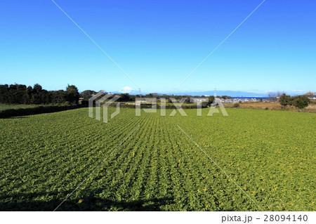 冬晴れの畑 28094140